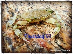 Thursday 13 Crab