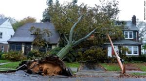 Sandy Fallen Tree
