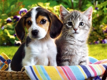 Image-of-Cute-Puppy-and-Kitten